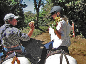 4 Hour Tour Horse Riding Monteverde