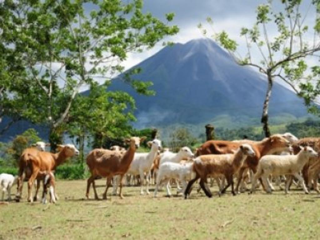Farm at Hotel Arenal Manoa 3