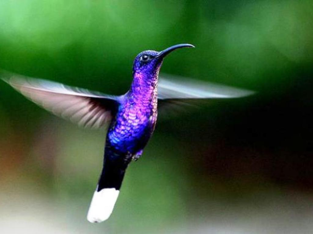 Hummingbird Garden Costa Rica Desafio Office