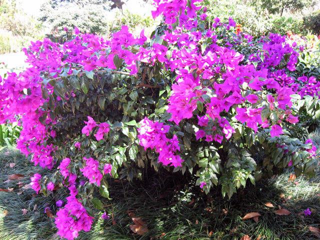 Orosi Valley and Lankester Gardens