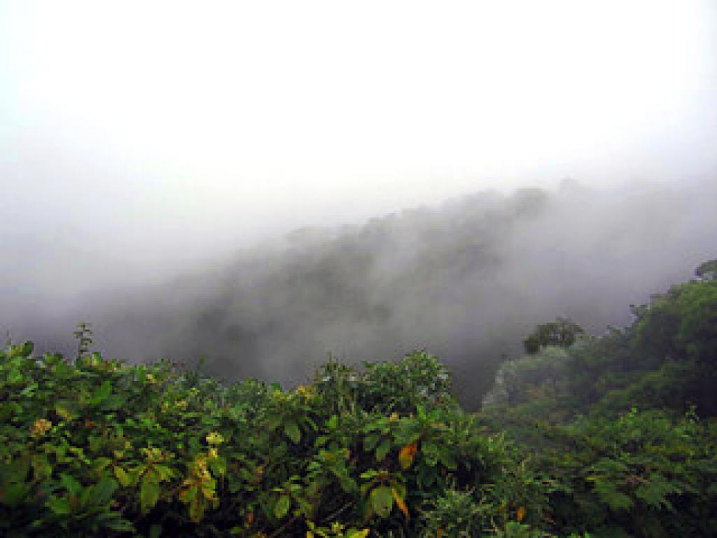 Misty Forests Monteverde Costa Rica