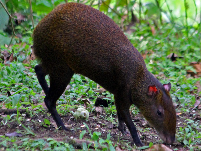 Monitoring Wildlife Costa Rica