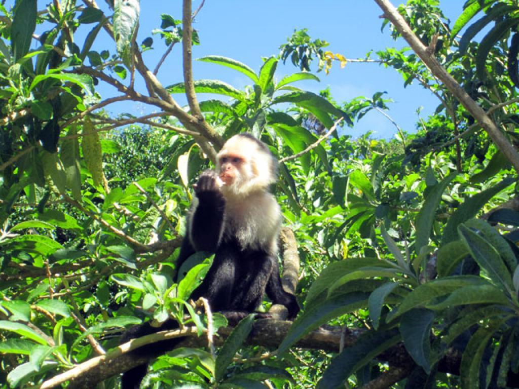 monkey garden at Desafio Monteverde