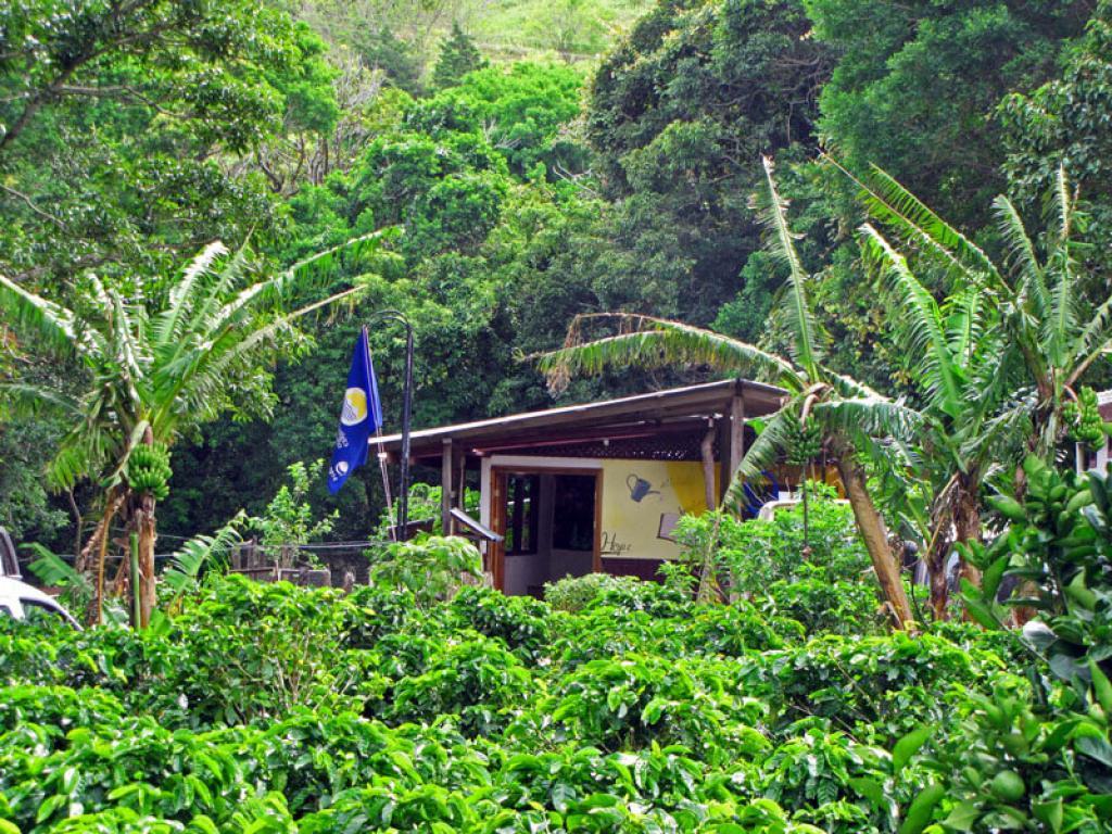 Monteverde Cafe at LIFE