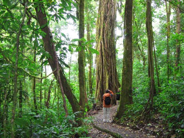 Monteverde Reserve Hike Costa Rica