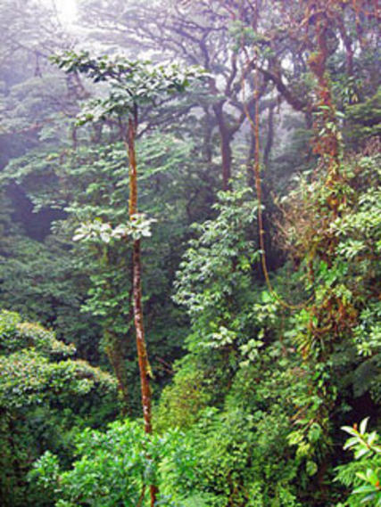Thirsty Forests Monteverde Cloud Forests Costa Rica