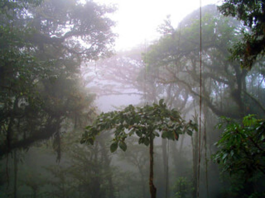 Misty Forests Monteverde Cloud Forest