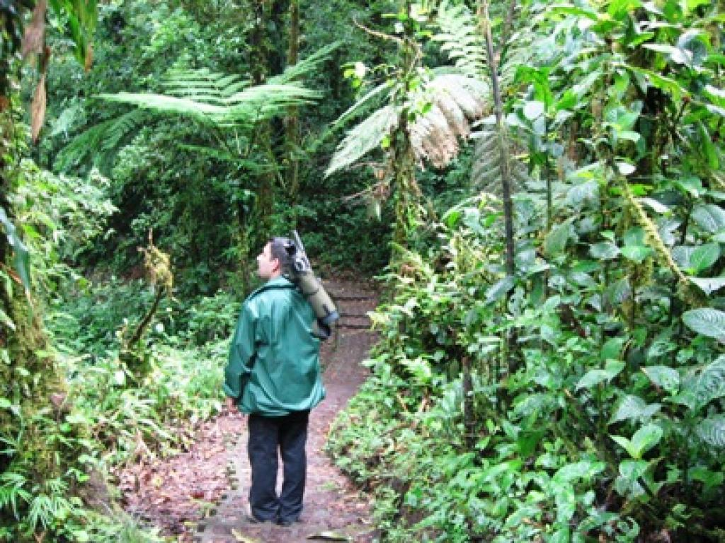 Monteverde Forest Guided Tour
