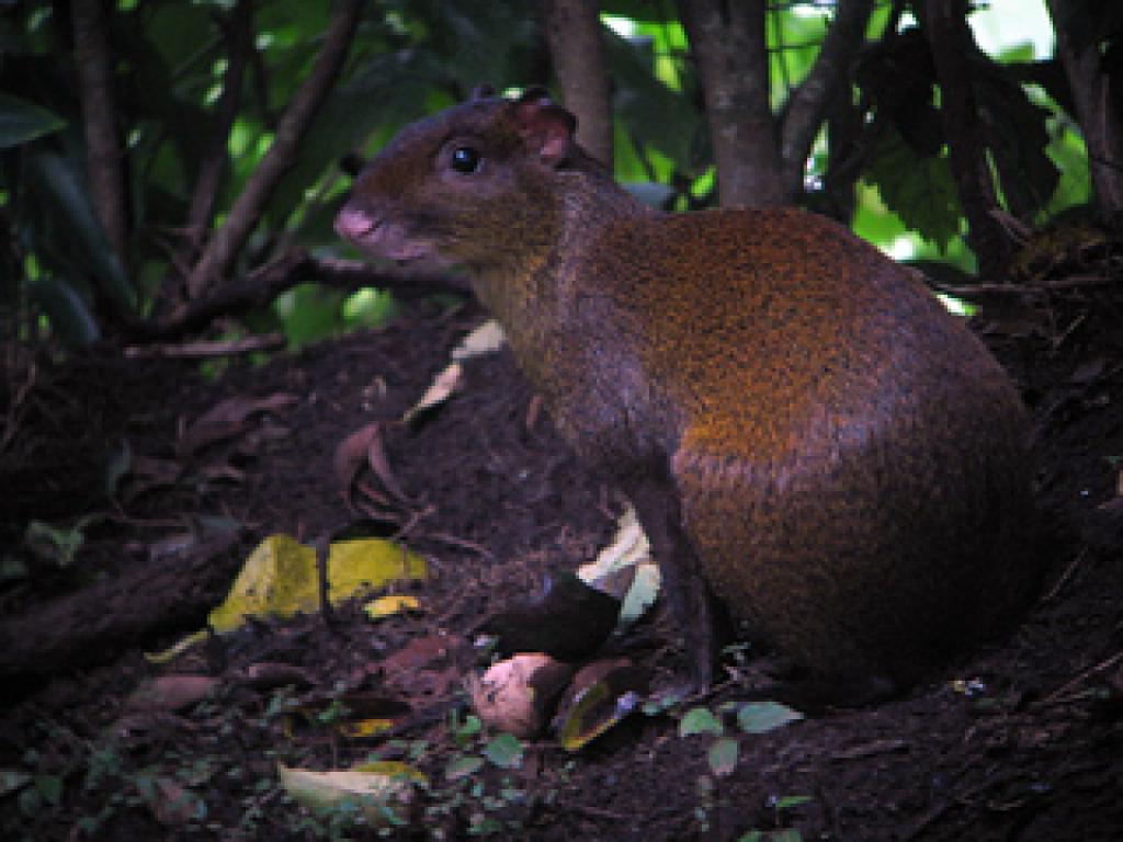 Creatures at the Wildlife Refuge Monteverde