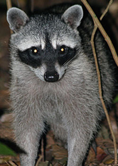 Wildlife Refuge Monteverde Night Tour
