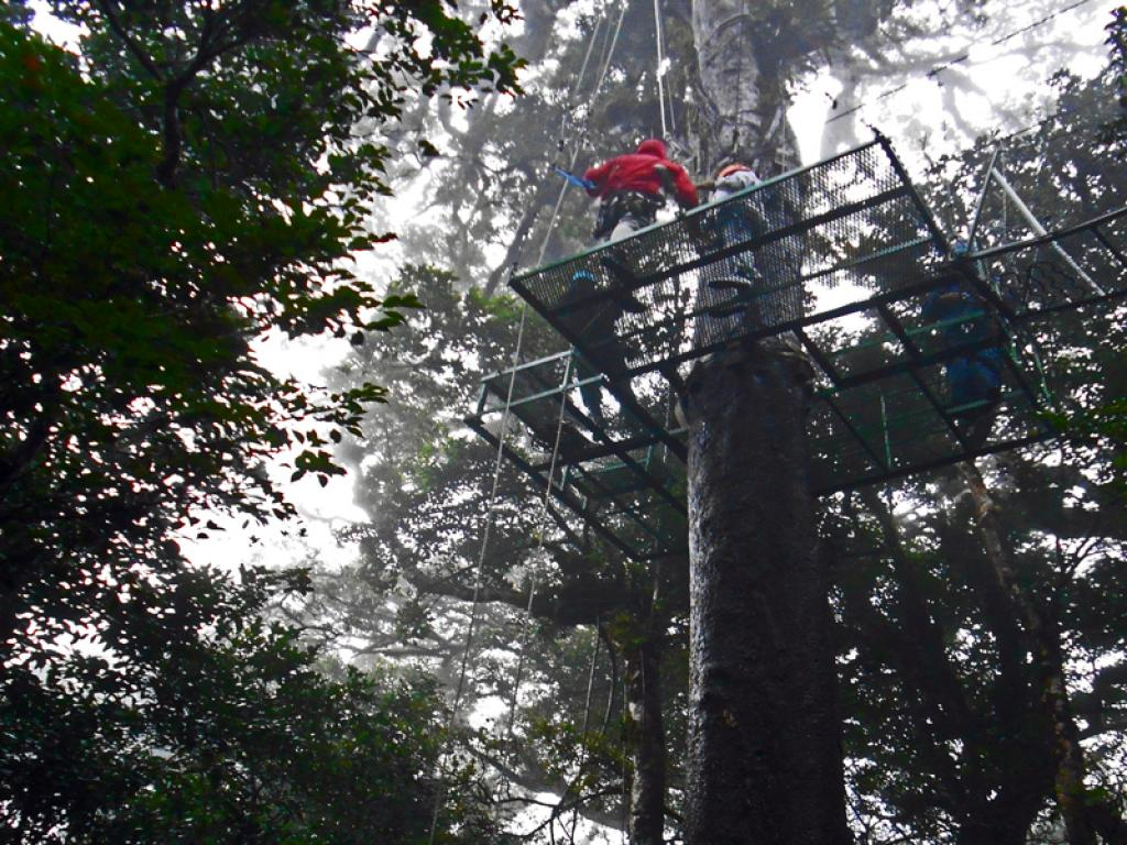 platforms aventura canopy monteverde costa rica