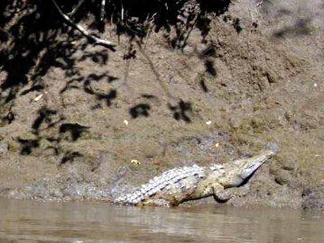 Palo Verde Guanacaste