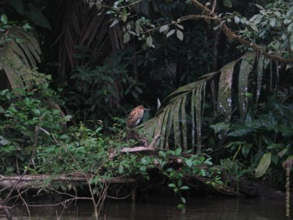 Costa Rica Peñas Blancas Safari Float