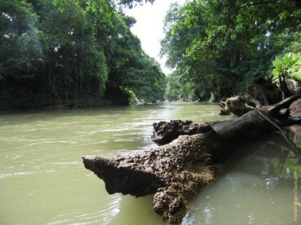 Safari Float in Arenal