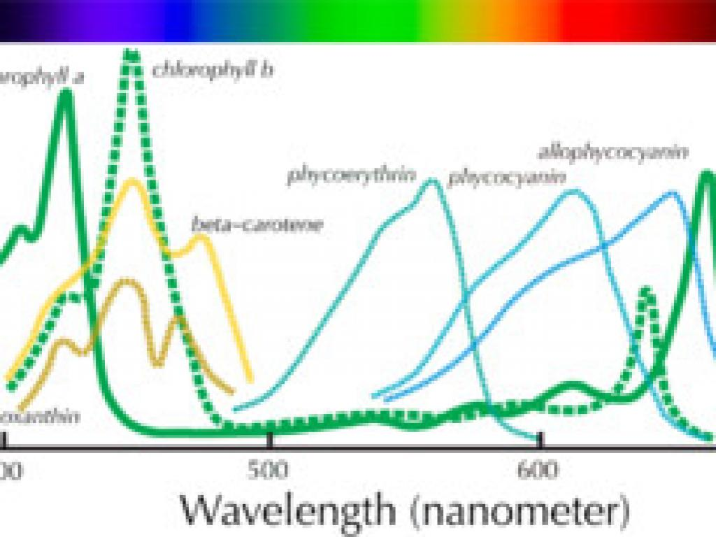 Pigment Spectra