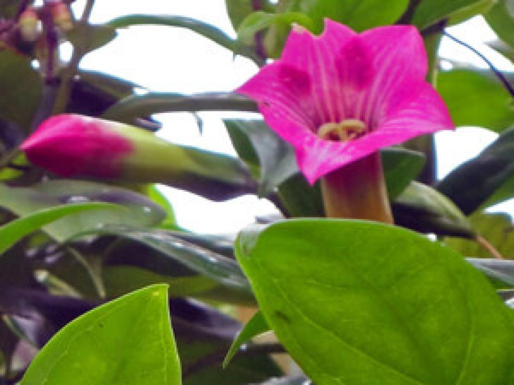 Beautiful Orchids Monteverde Costa Rica