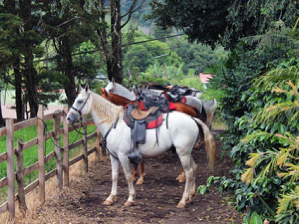 Saddled-up and ready. Horseback Riding Monteverde