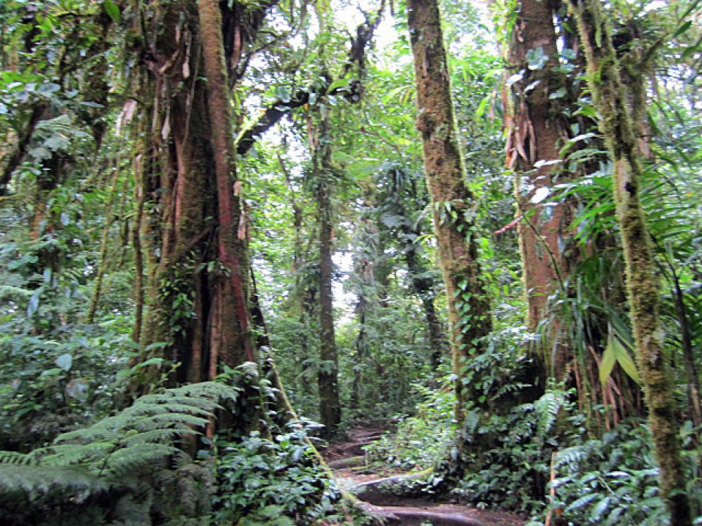Santa Elena Cloud Forest