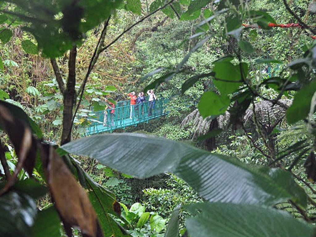 Selvatura Hanging Bridges