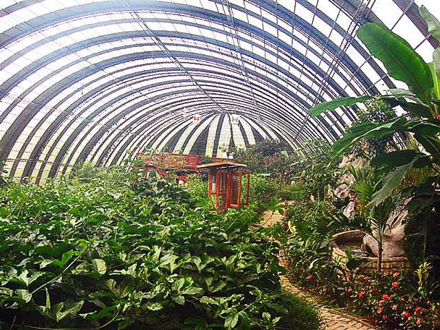 Butterfly Gardens Selvatura