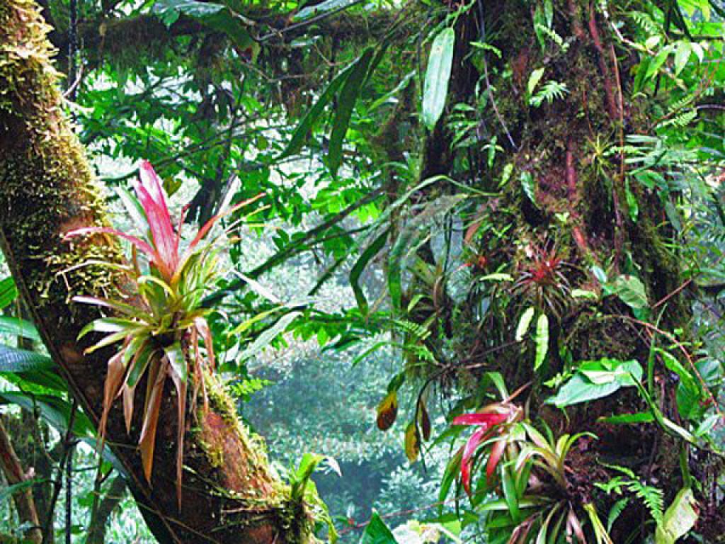 Plant Life Monteverde Costa Rica