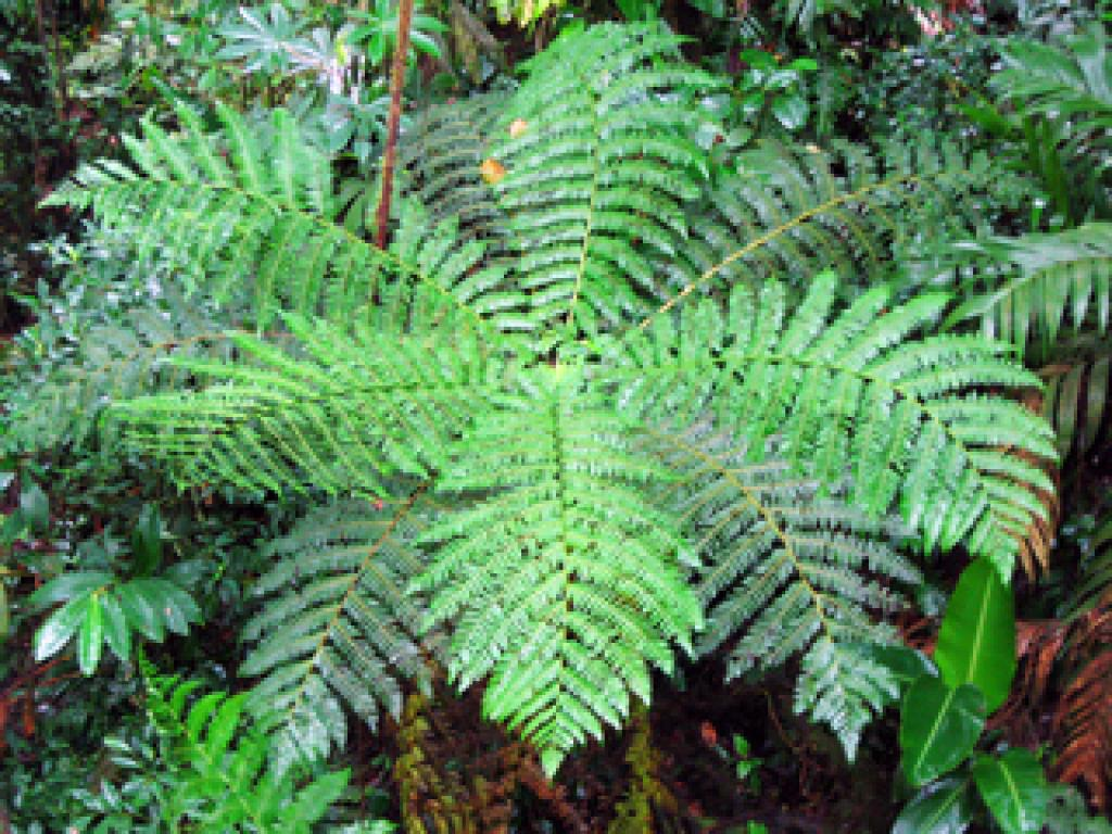 Plant Life in Monteverde Forest