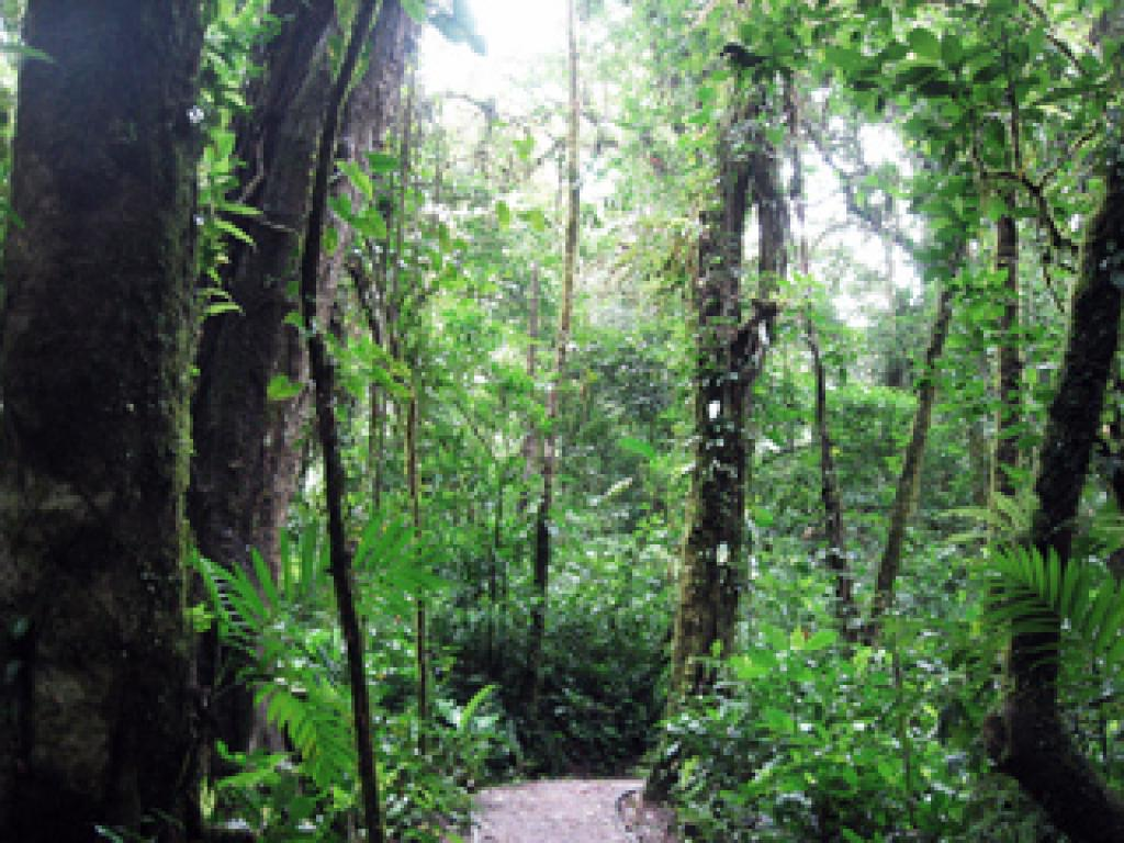 Trails in the Monteverde Cloud Forest in Costa Rica