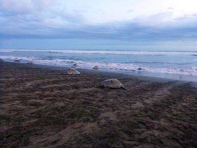 Turtle Tours from Samara