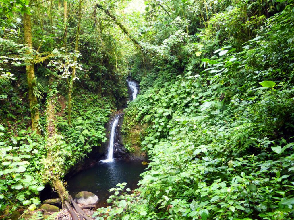 Waterfall at the Monteverde Cloud Forest