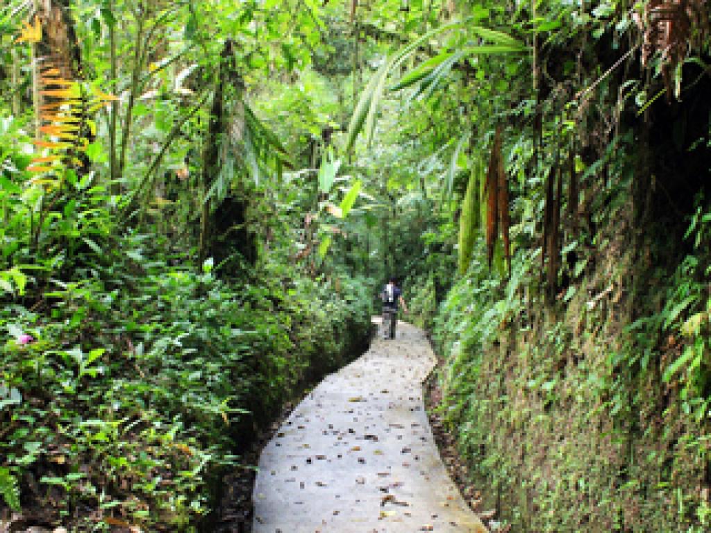 Santa Elena Cloud Forest Wheel Chair Accessible Trail