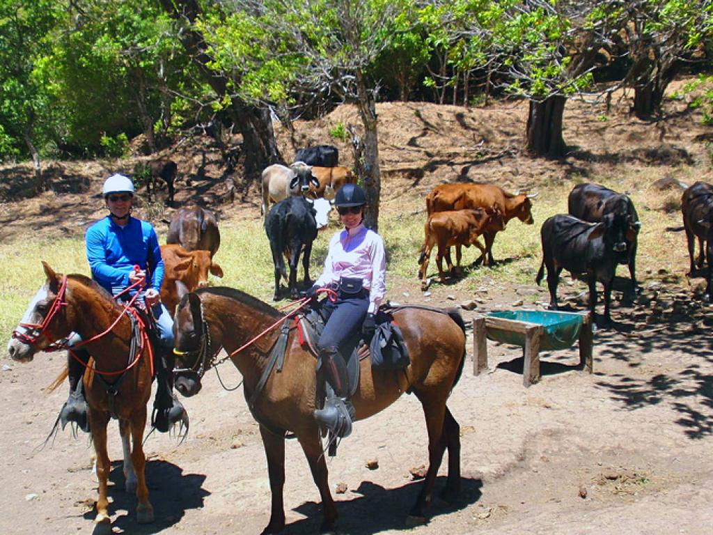 Monteverde All Day Coboy Ride -with cattle