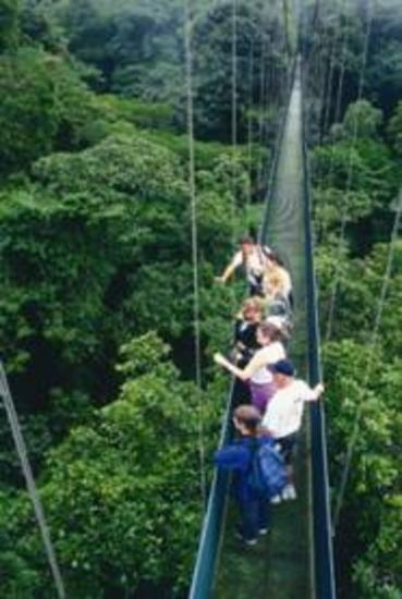 Skywalk Hanging Bridges Monteverde
