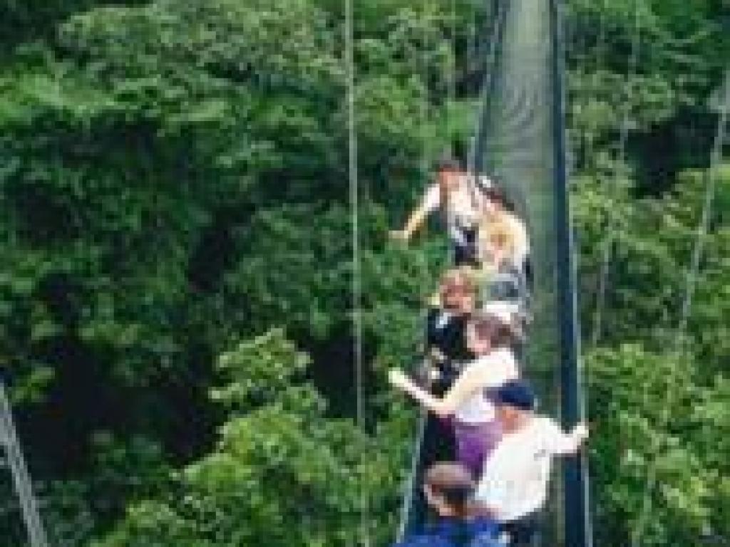 Skywalk Hanging Bridges Monteverde